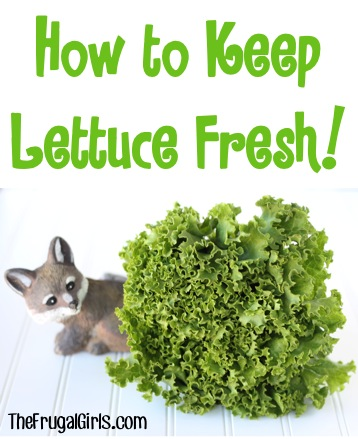 How to Keep Lettuce Fresh - tips at TheFrugalGirls.com