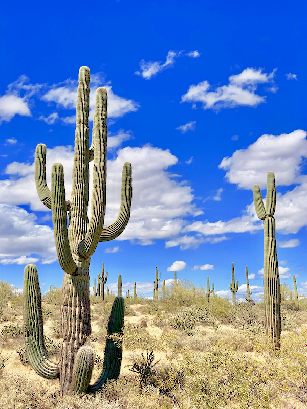 Best Things to Do in Phoenix Arizona