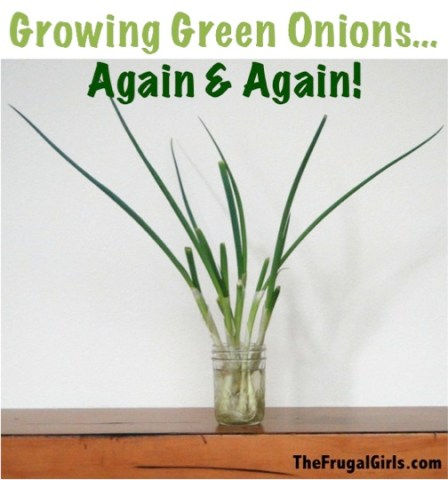Green Onions Growing in Water Tip