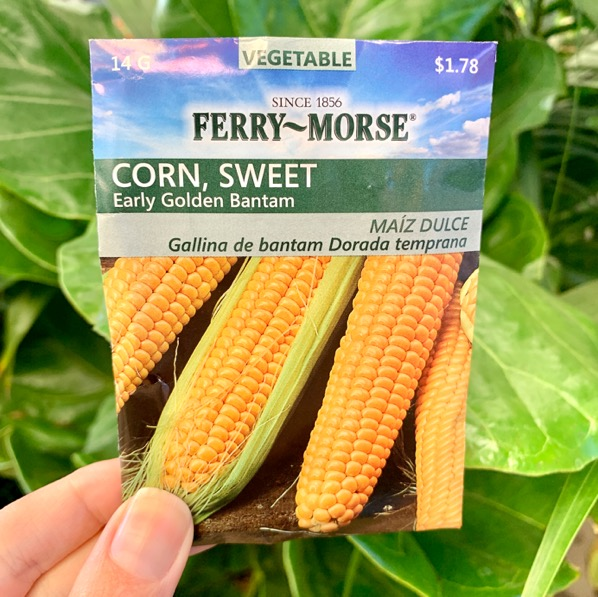 How to Grow Corn from Seed