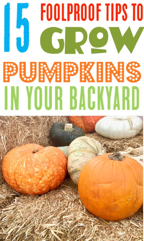 Pumpkin Garden Ideas - How to Grow Pumpkins in your Yards - Tips for Vertical Gardening and more