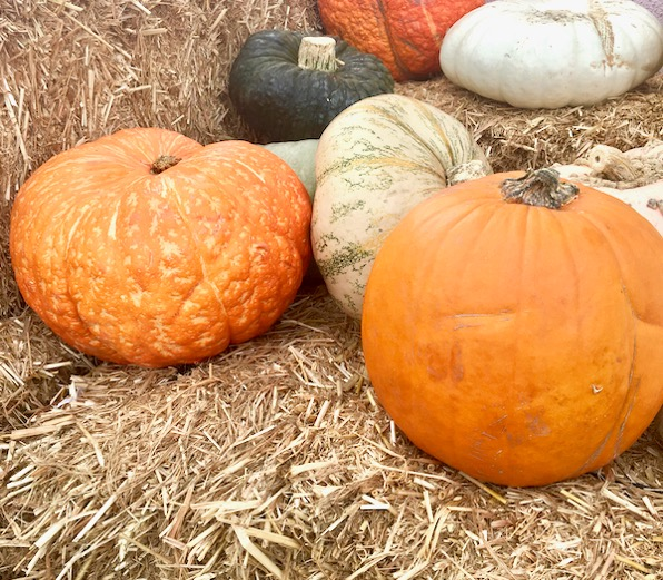 Pumpkin Growing Tips and Tricks Easy