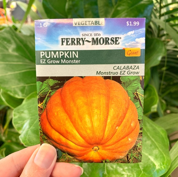 Pumpkin Plant Growing Tips