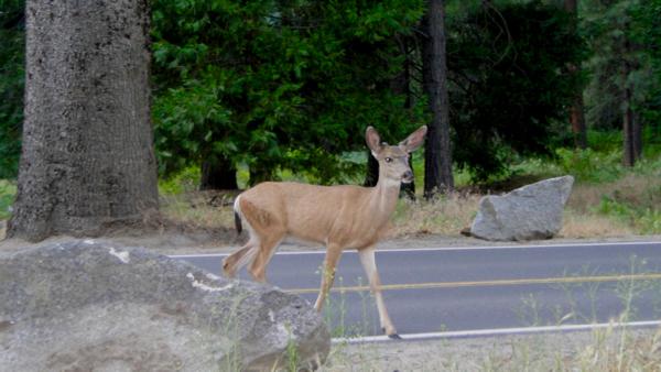 Yosemite Wildlife - TheFrugalGirls.com