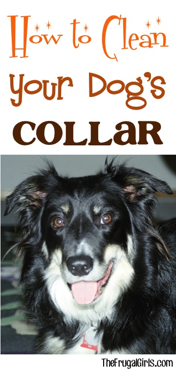 How to Clean a Dog Collar from TheFrugalGirls.com