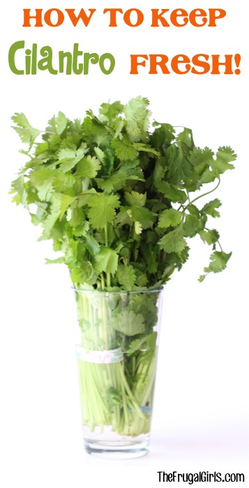 How to Keep Cilantro Fresh - Tip at TheFrugalGirls.com