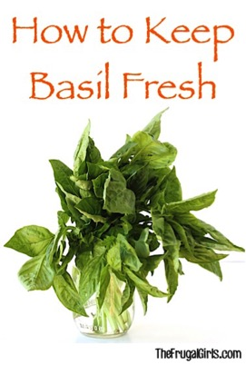 How to Keep Basil Fresh