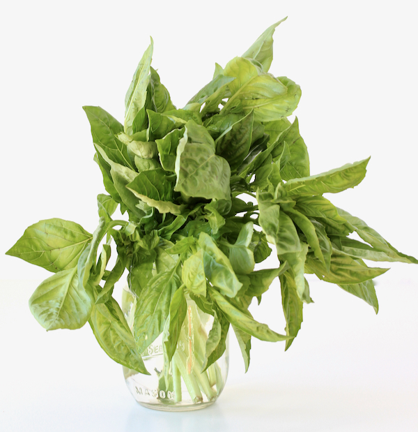 How to Keep Basil Fresh for Longer