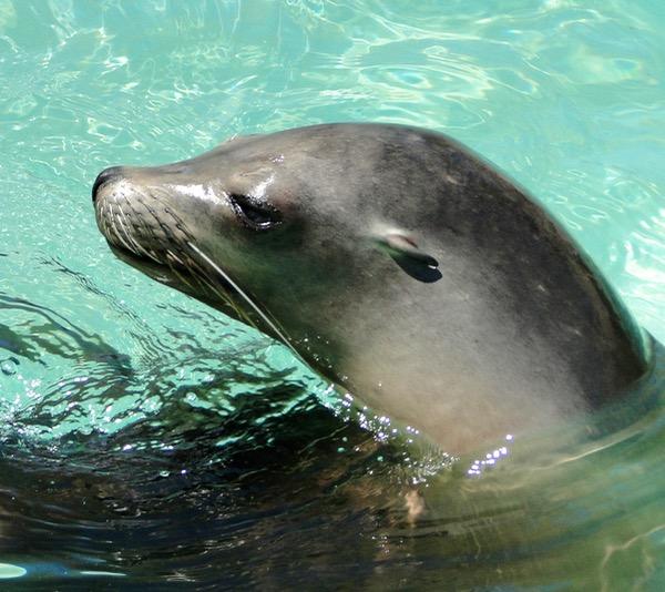 SeaWorld Attractions Sea Lions
