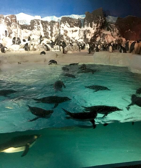SeaWorld Penguin Encounter