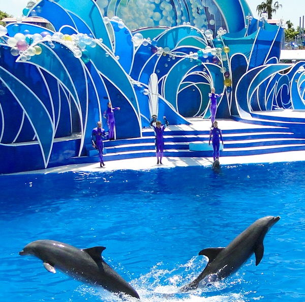 SeaWorld Top Shows Dolphin Days