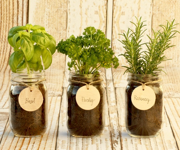 DIY Indoor Mason Jar Herb Garden from TheFrugalGirls.com