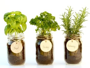 DIY Mason Jar Herb Garden at TheFrugalGirls.com