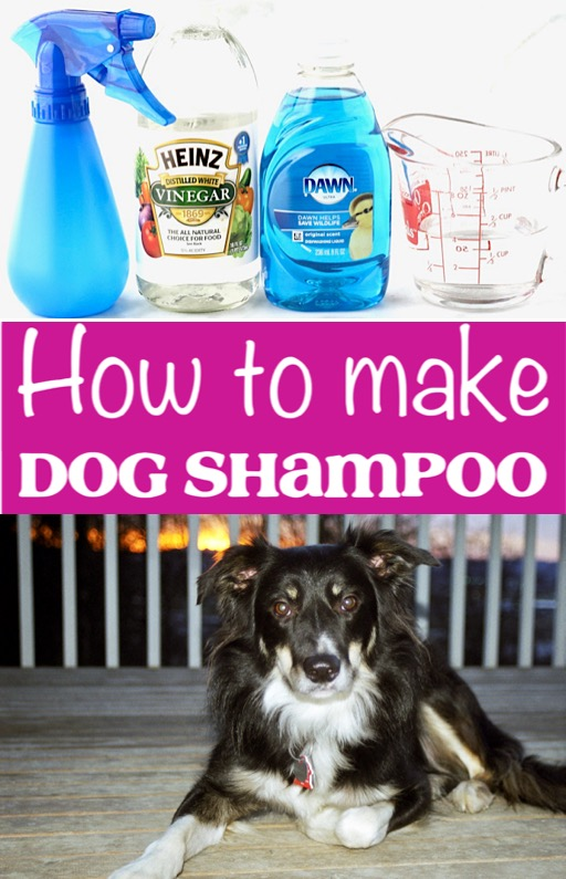 Dog Shampoo DIY Homemade Recipe