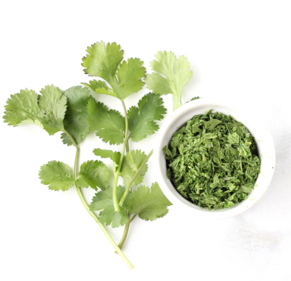 How To Dry Cilantro Leaves In 2 Minutes Dried Herb Trick