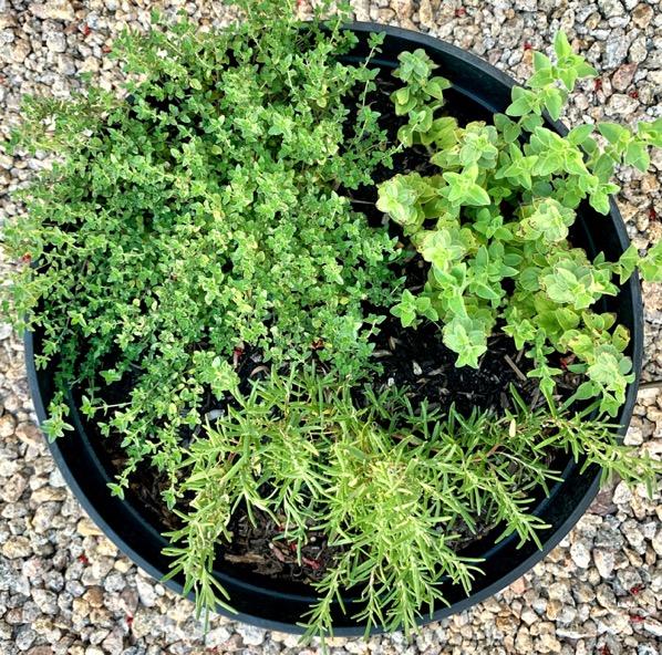 How to Grow Fresh Herbs in the Garden