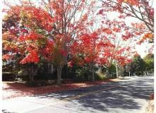 Fall comes to Newport