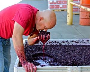 Lodi Michael-McCay-smelling-2012-Zinfandel-300x240