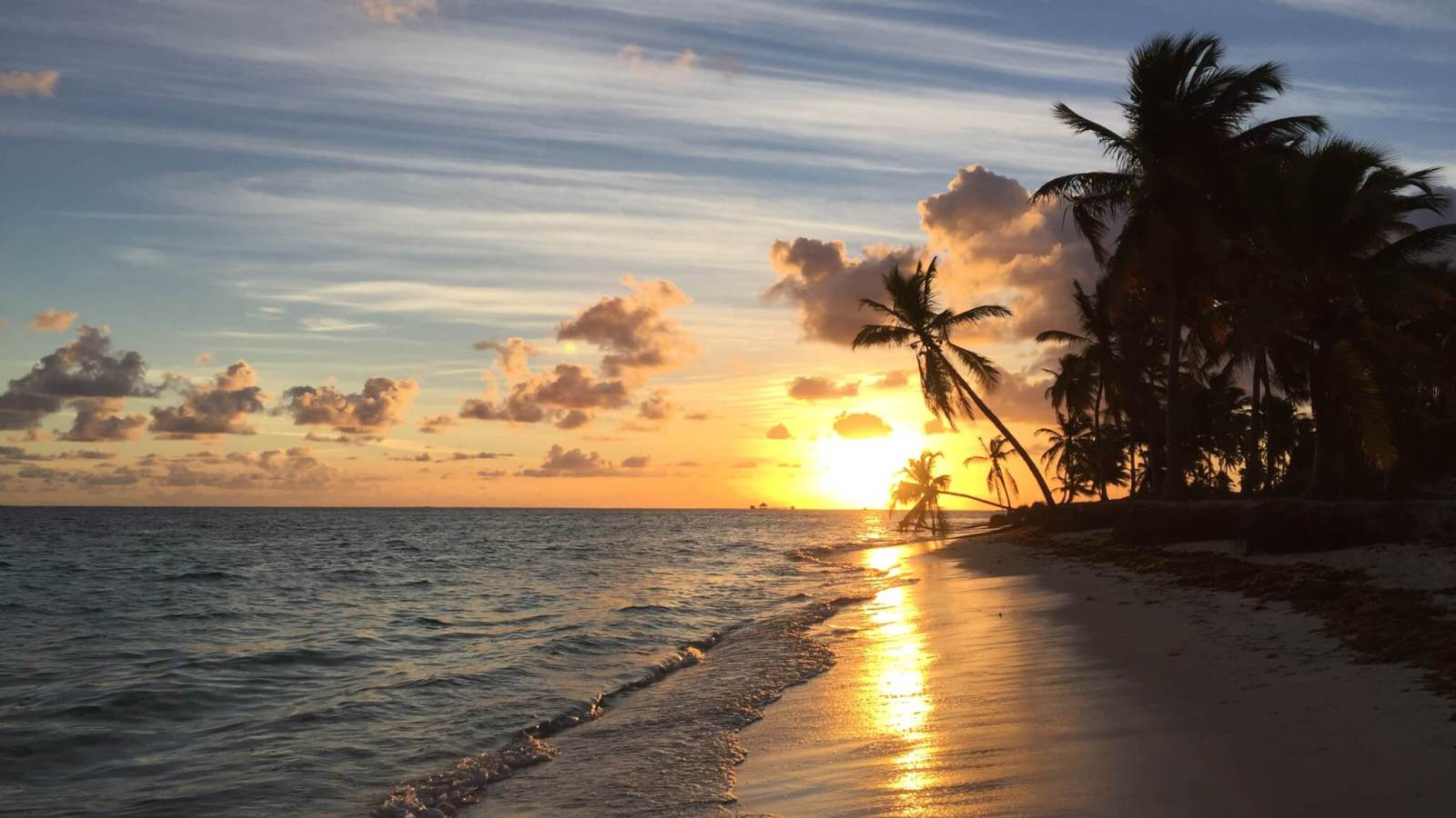 Sunrise over ocean in Punta Cana with palm tree silhouette