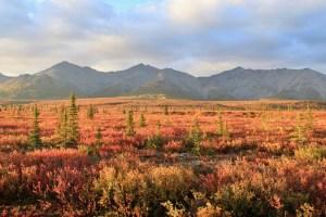 Fall colors in Denali