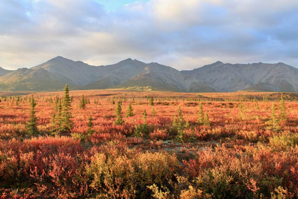 Fall colors in Denali National Park and Preserve