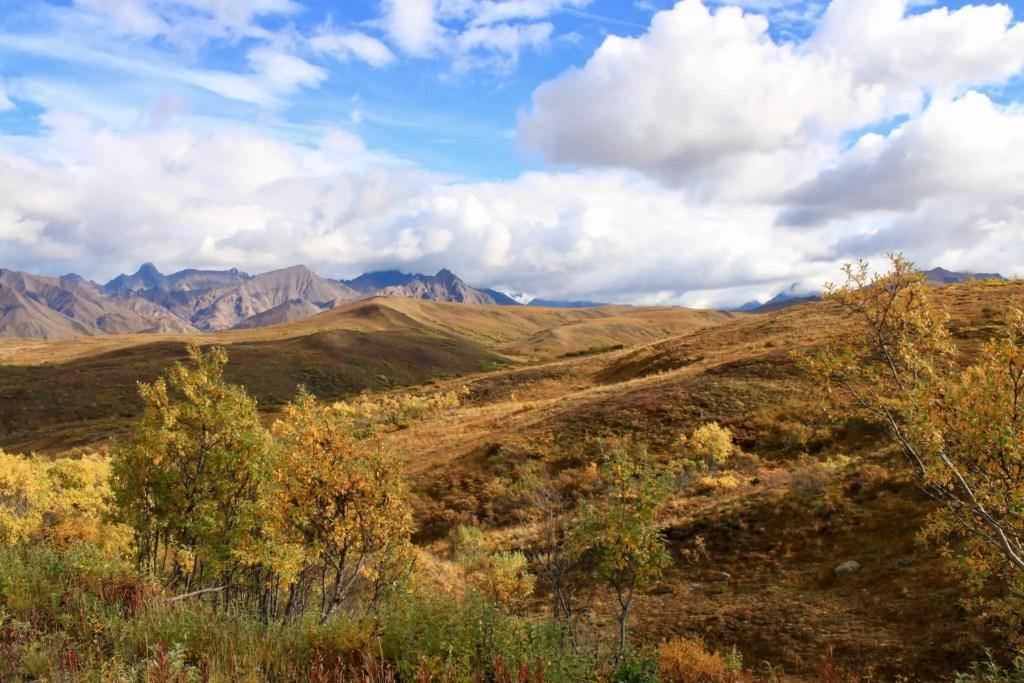 Fall colors on a Denali hillside