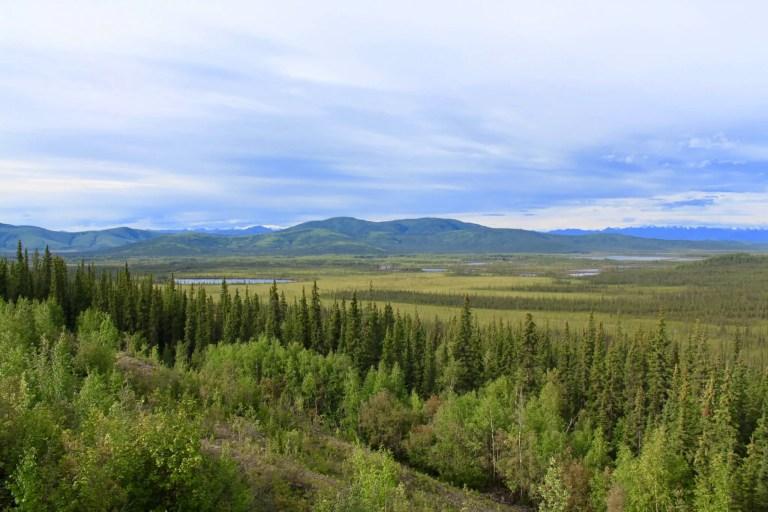 Trees, mountain, and vast Alaskan plain