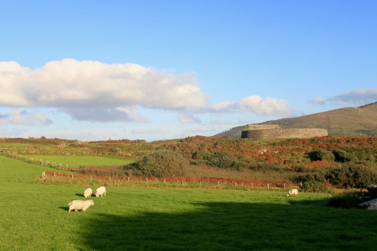 Sheep grazing in front of a ring fort