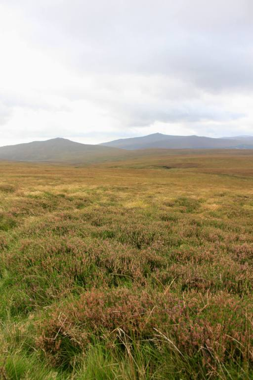 Treeless fields of heather and brown grass
