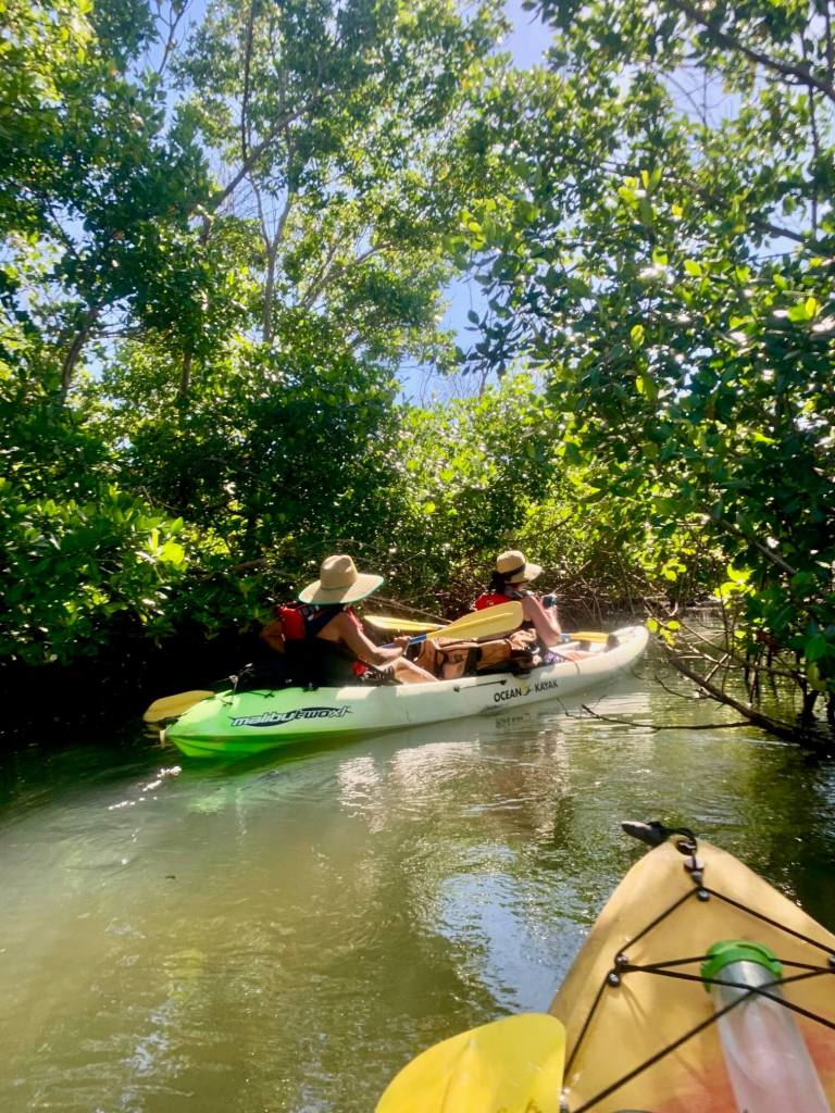 Kayaking through a mangrove forest on Vieques