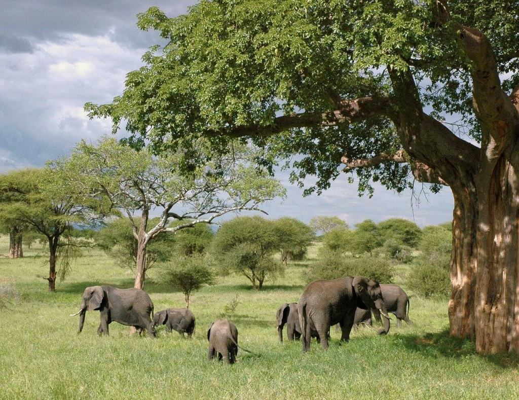 Elephants under a huge baobab tree in Tanzania. Taking a safari together would make for an unforgettable mother-daughter trip!