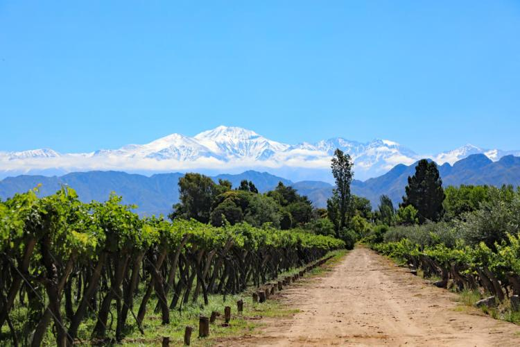 Dirt path through a vineyard with Andes Mountains beyond. Sipping wine in Argentina is a perfect mother-daughter trip activity!