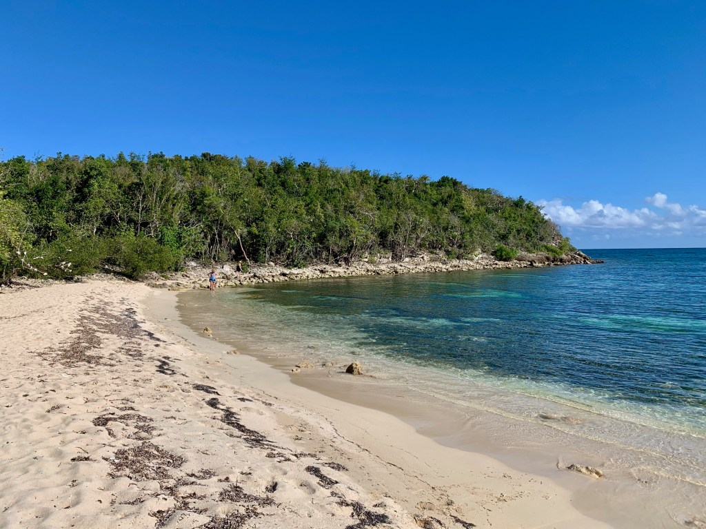 Deserted beach with lots of green vegetation
