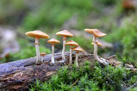 how to identify magic mushrooms, Shrooms: How to Identify Magic Mushrooms in 2020, The Fun Guys