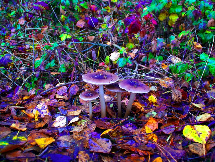 magic mushrooms as a cancer treatment, Alternative Medicine – Magic Mushrooms as a Cancer Treatment, The Fun Guys