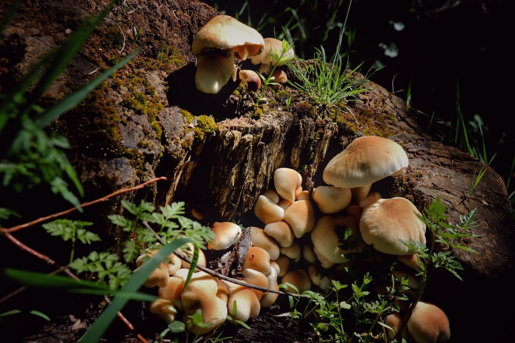 How to Grow Magic Mushrooms in Canada