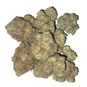 Platinum purple kush og shark cross dried cannabis