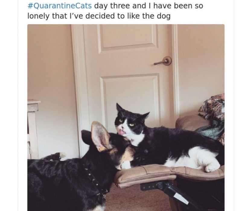 Funny Quarantine Cat Memes #QuarantineCat - The Funny ...