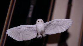 FOTF S.H Figuarts Harry Potter Review 20