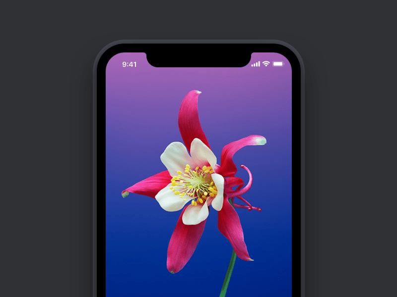 Simple Beautiful iPhone X Mockup