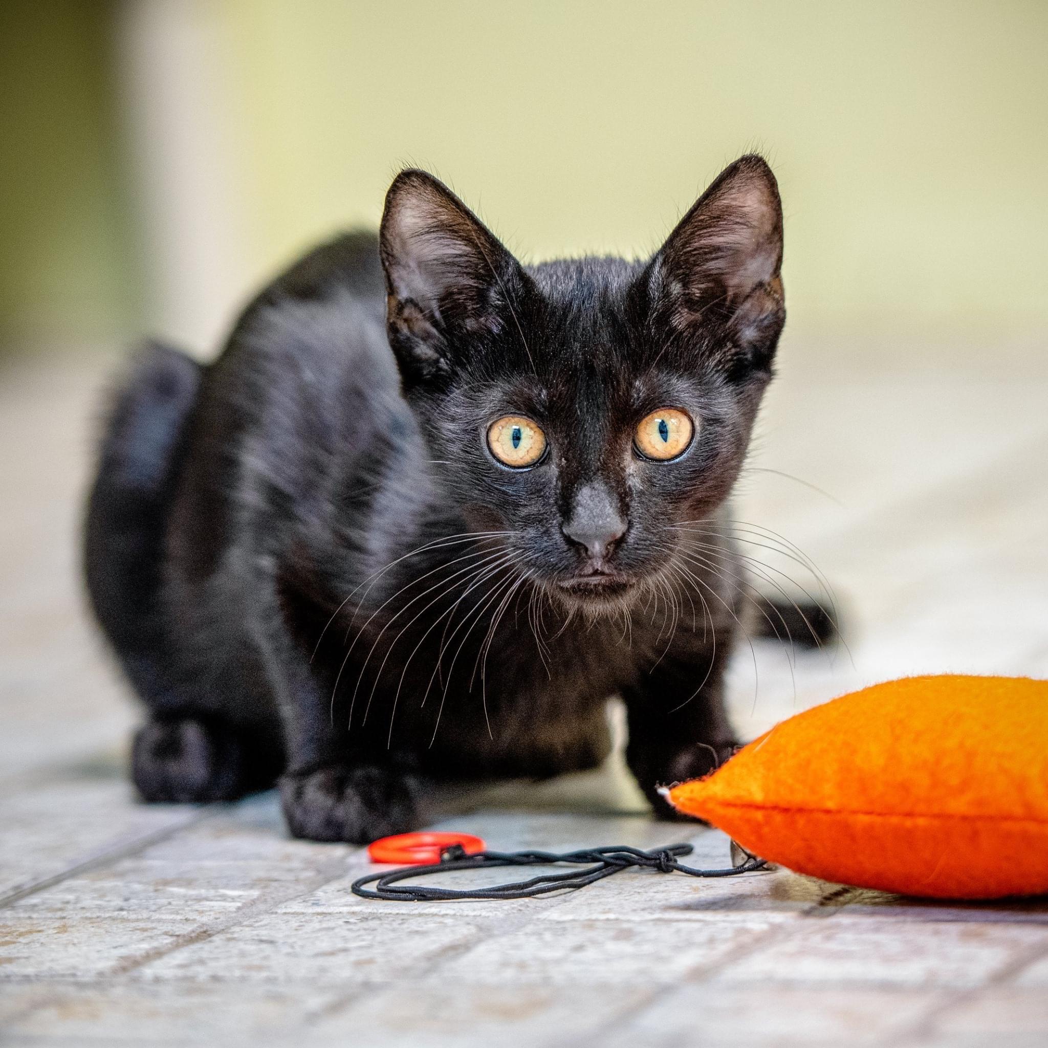 Black cat crouching on floor