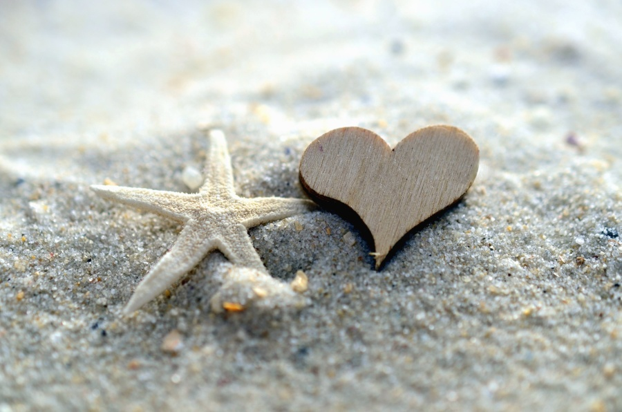 A small starfish and a wooden heard in the sand
