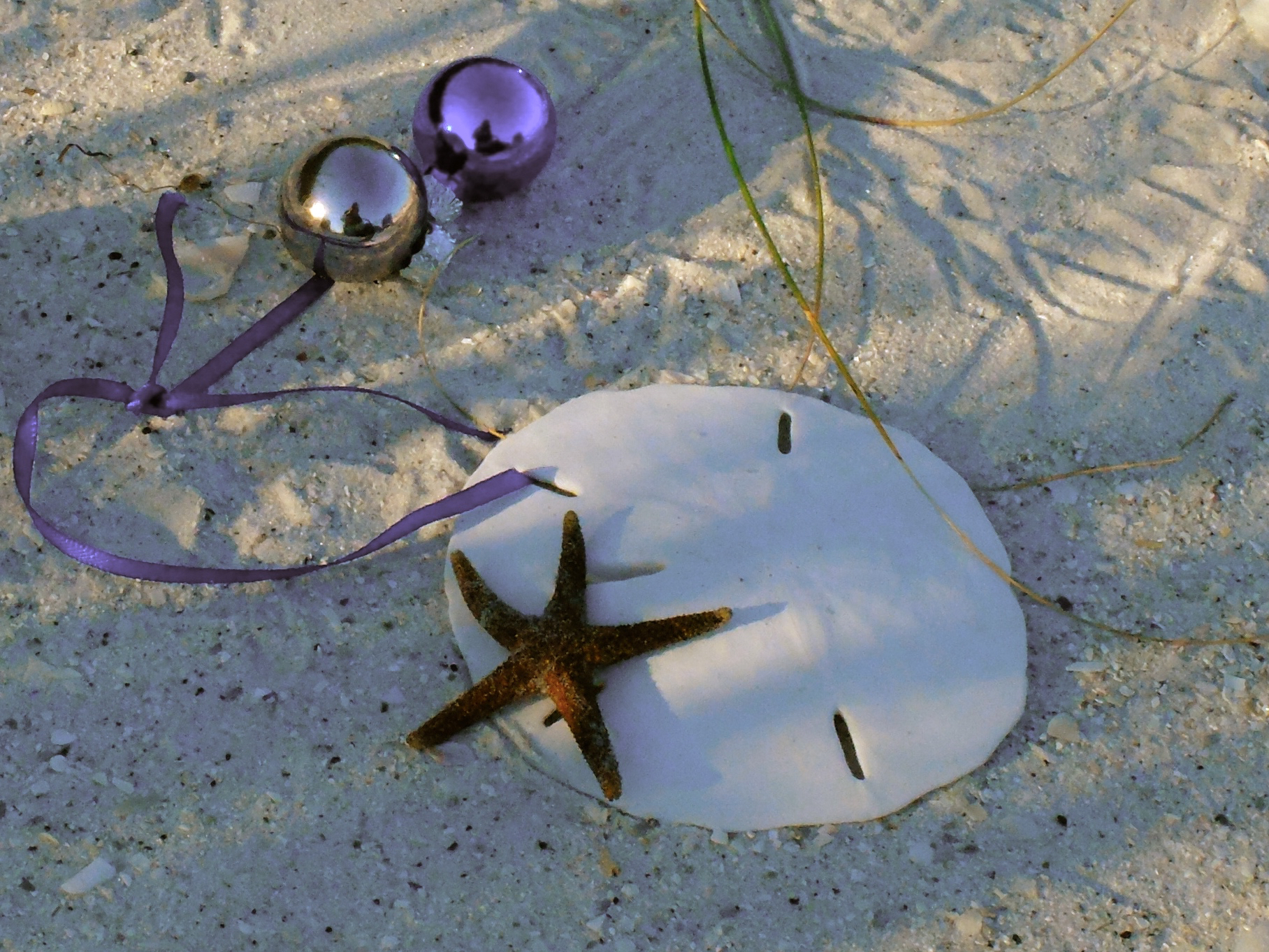 Florida Christmas scene with sand dollar, starfish, and ornaments – photo by Cathy Salustri