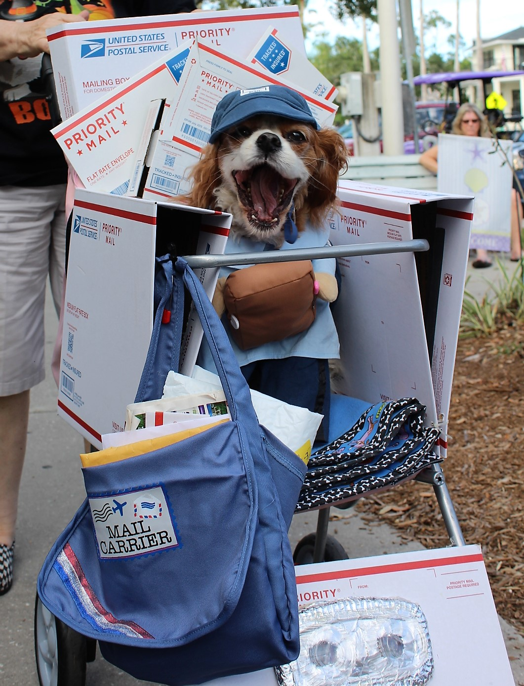 A small dog in a US Postal Worker costume surrounded by pieces of mail.