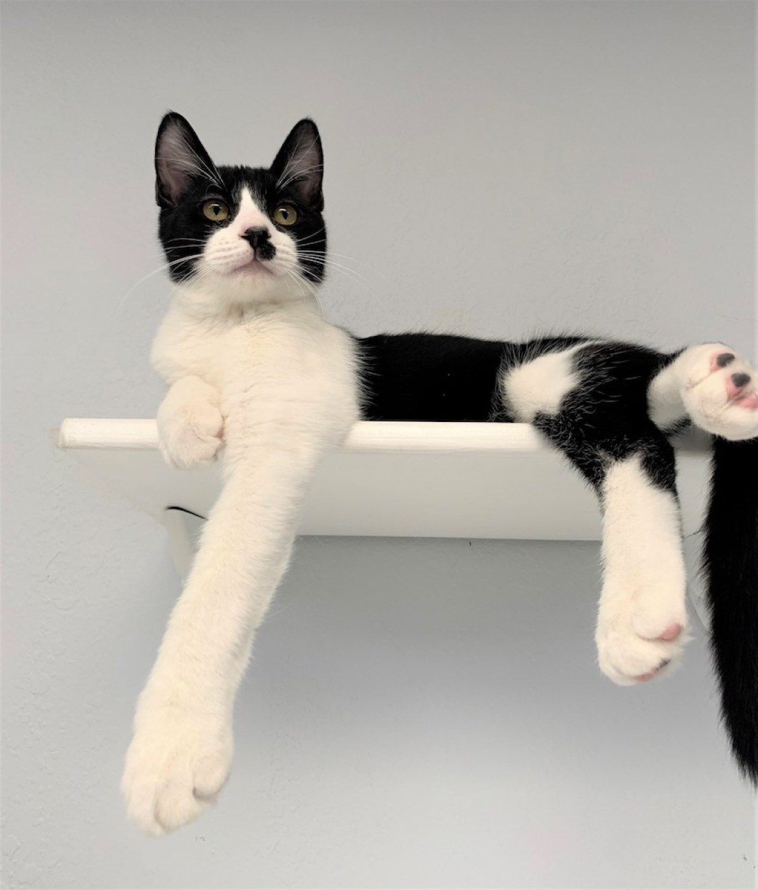 A black and white cat sitting on a top shelf.