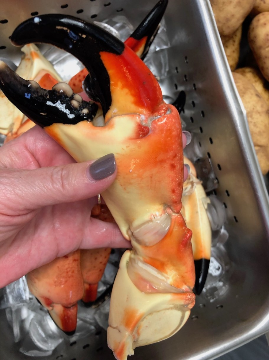 A hand holding a stone crab claw over a bucket of other claws in ice.