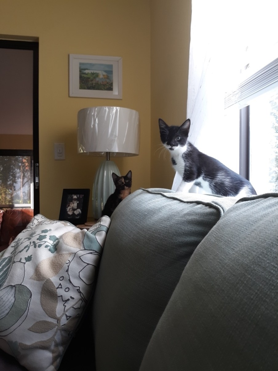 Two cats on a couch looking at the camera