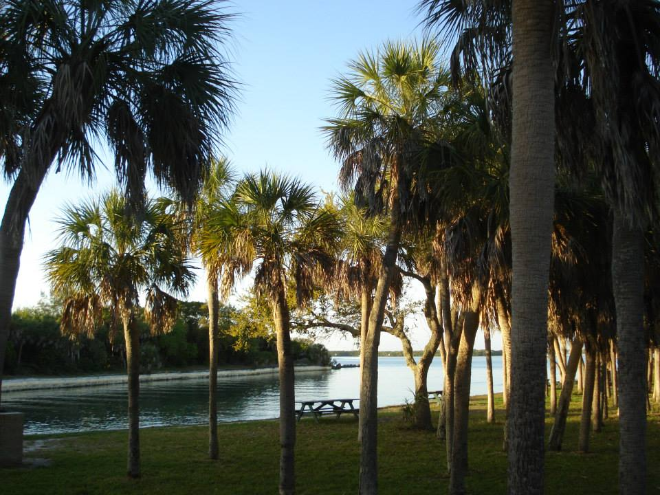 Palm trees near the water.