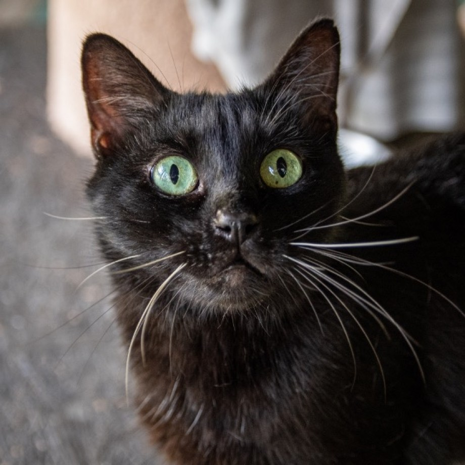 A black cat with green eyes