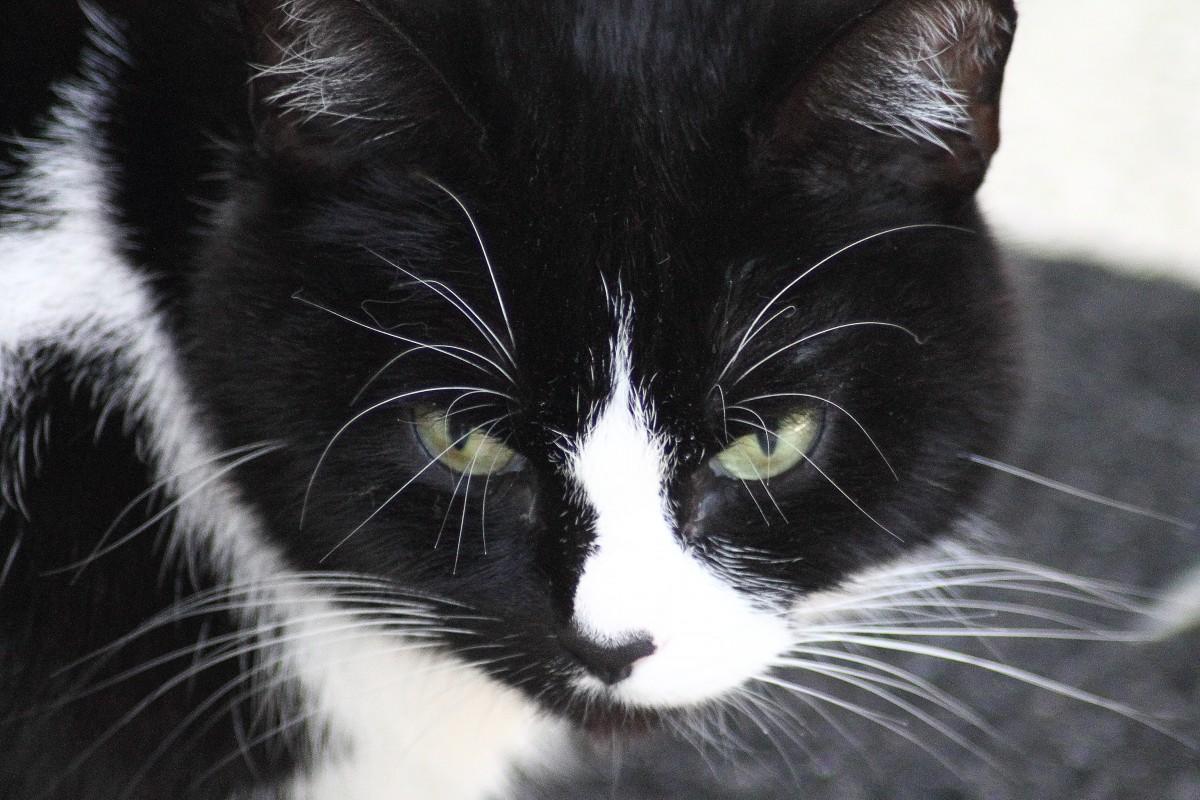 A closeup of a black and white cat